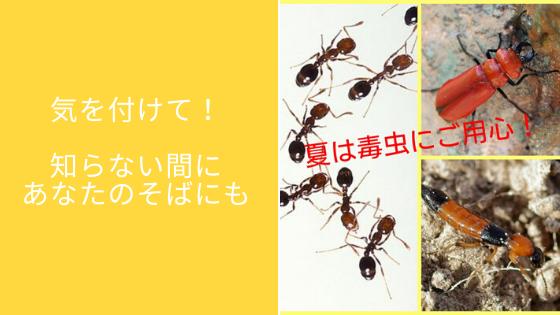 夏の毒虫にご用心!