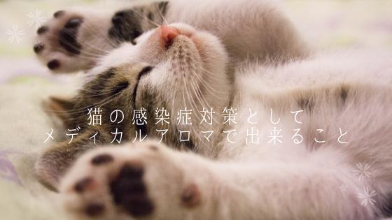 猫の感染症対策としてメディカルアロマで出来ること